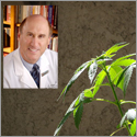 Research — not regulations — should guide medical marijuana use, journal editor says